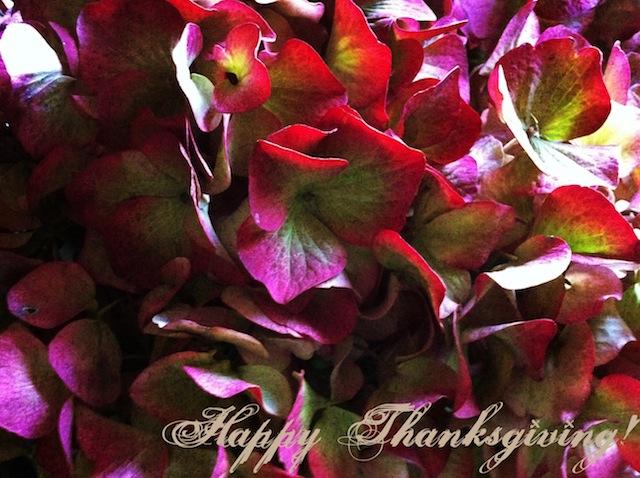 Happy Thanksgiving flower